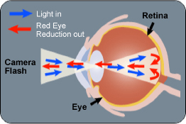 Learn how to remove red eye from your photos!